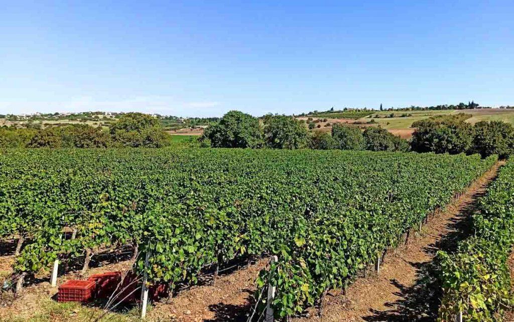 Κρασί   Αναμένεται πτώση 13% στη φετινή παραγωγή κρασιού στην Ευρώπη