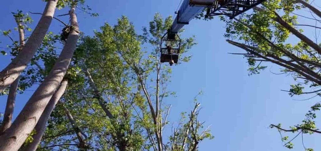 Απλοποιείται η διαδικασία υλοτόμησης δέντρων σε ιδιωτικές εκτάσεις, εκτός ορίων οικισμού