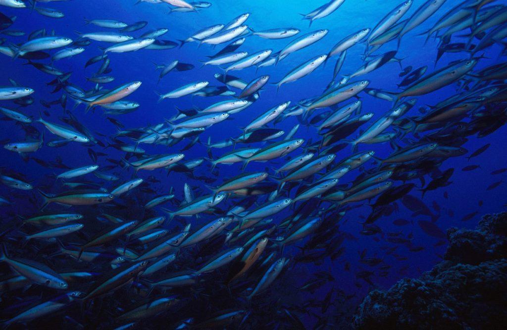 Ecoscope | Η online εφαρμογή του ΑΠΘ για την παρατήρηση των θαλάσσιων οικοσυστημάτων